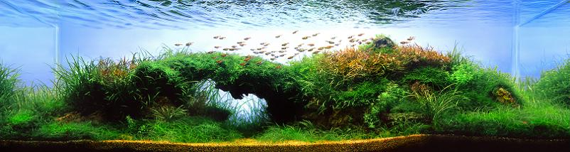 25 artur frankowski worlds best aquariums Underwater Gardening: The Worlds Best Aquariums of 2009