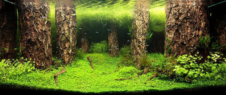 27 jamie lin underwater forest Underwater Gardening: The Worlds Best Aquariums of 2009