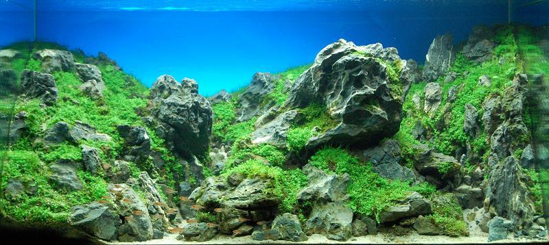 3 yuji yoshinaga 2009 iaplc Underwater Gardening: The Worlds Best Aquariums of 2009