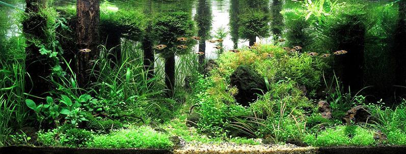 Underwater Gardening The Worlds Best Aquariums of 2009