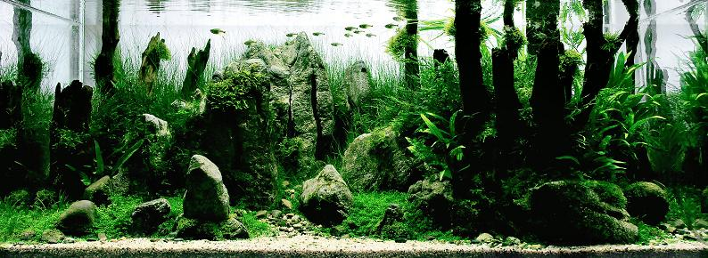 5 wang chao incredible fresh water aquarium Underwater Gardening: The Worlds Best Aquariums of 2009