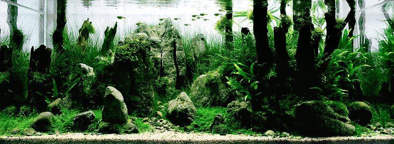 5 wang chao incredible fresh water aquarium Underwater Gardening: The Worlds Best Aquariums of 2009