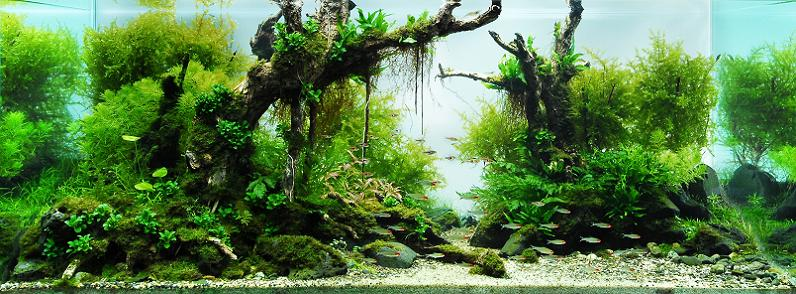 7 lin tin chuan aquascapes Underwater Gardening: The Worlds Best Aquariums of 2009