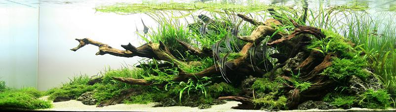 8 nguyenthi xuanthuy aquascaper Underwater Gardening: The Worlds Best Aquariums of 2009