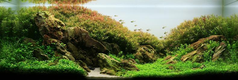 9 ngo truong thinh living art Underwater Gardening: The Worlds Best Aquariums of 2009