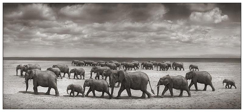 parade-group-of-elephants