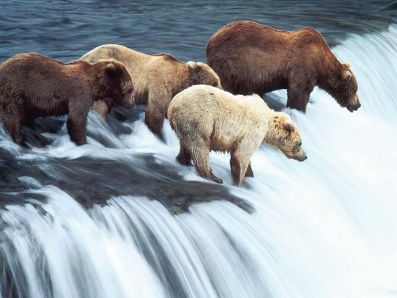 sleuth group of bears 10 Bizarre Names for a Group of Animals