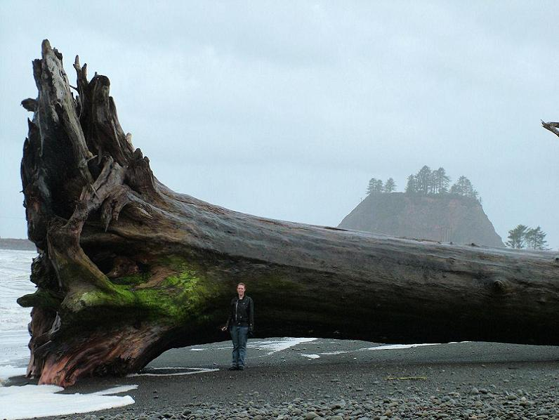 Picture of the Day – Mega Driftwood