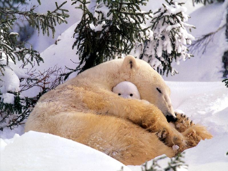 polar bear hug Picture of the Day   July 3, 2010