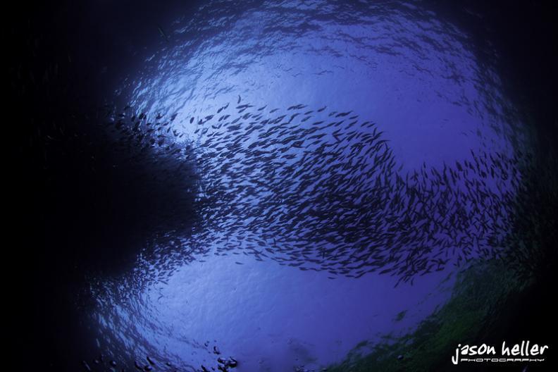 school of fish from below 15 Fascinating Schools of Fish