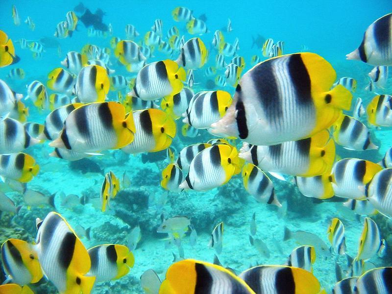 school of tropical fish 15 Fascinating Schools of Fish