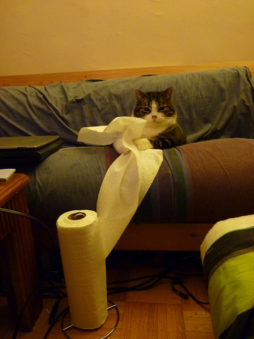 cat-with-paper-towel