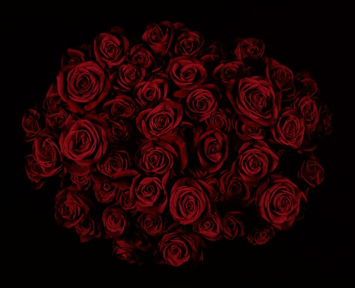Deep red Roses | I Love Red! | Pinterest