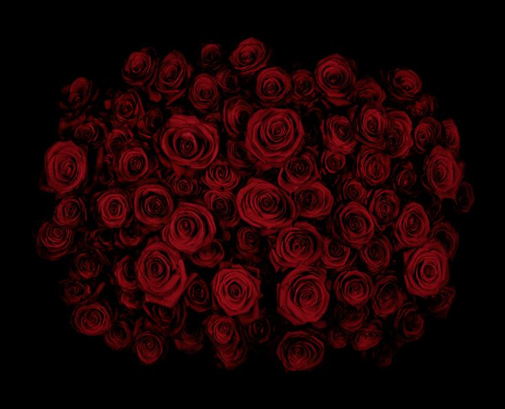 dark red roses Guns and Roses by Guido Mocafico