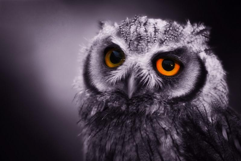 expressive owl 10 Awesome Facts About Owls [15 pics]