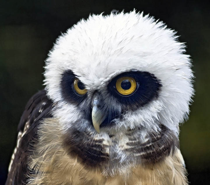 funny looking owl 10 Awesome Facts About Owls [15 pics]