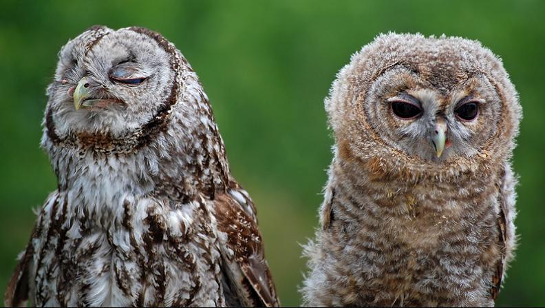 never talk to you again upset owl 10 Awesome Facts About Owls [15 pics]