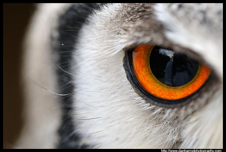 owl eye close up macro 10 Awesome Facts About Owls [15 pics]