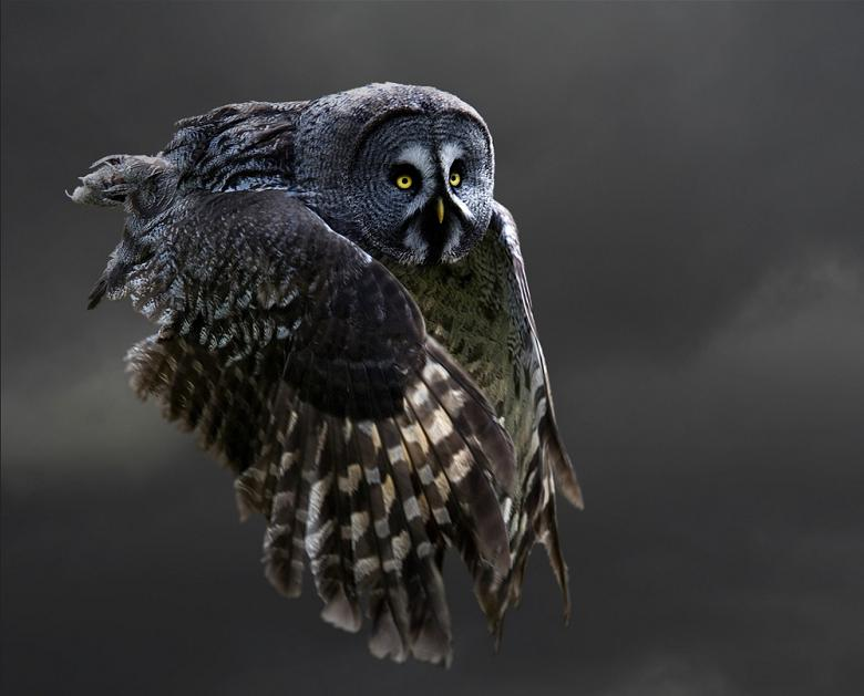 owl flying 25 Stunning Photographs of Birds in Flight