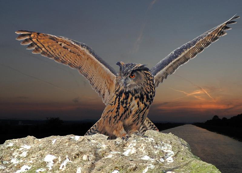owl landing wings spread 10 Awesome Facts About Owls [15 pics]