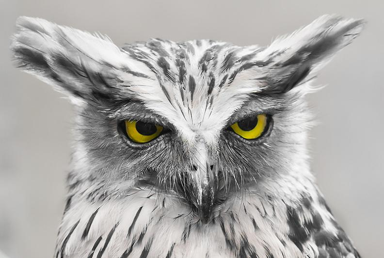 owl look of disapproval 10 Awesome Facts About Owls [15 pics]