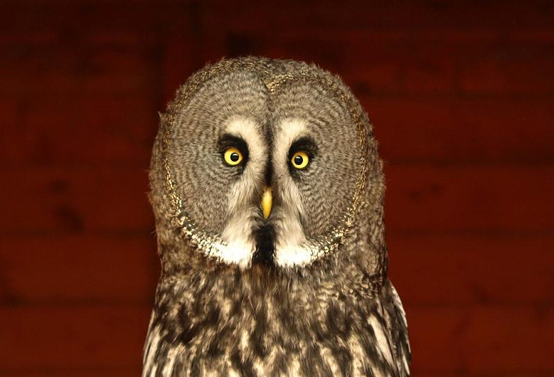 surprised owl 10 Awesome Facts About Owls [15 pics]
