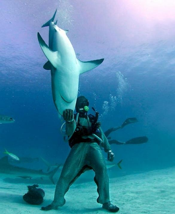 diver-holding-a-shark-by-its-head