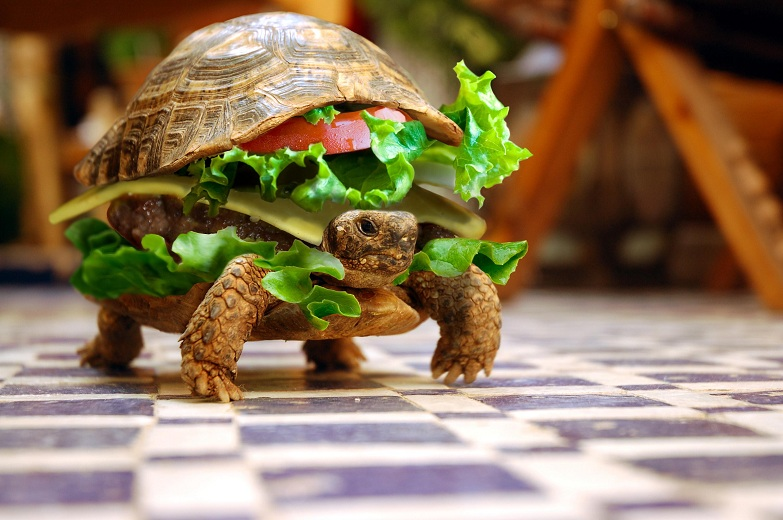 turtle burger Picture of the Day   September 29, 2010