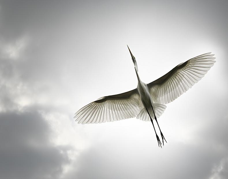 bird from below 25 Stunning Photographs of Birds in Flight
