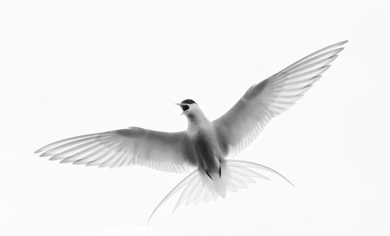 bird from the bottom 25 Stunning Photographs of Birds in Flight