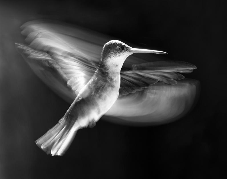 bird high speed photography wings 25 Stunning Photographs of Birds in Flight
