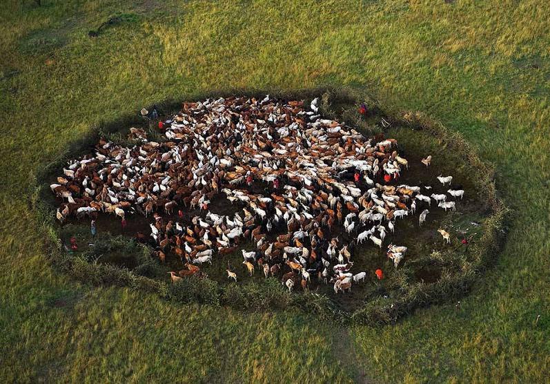 -Parque de ganado masai-mara-national-kenya-aérea-Yann-Arthus-Bertrand