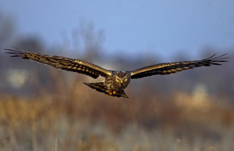 hawk head on 25 Stunning Photographs of Birds in Flight