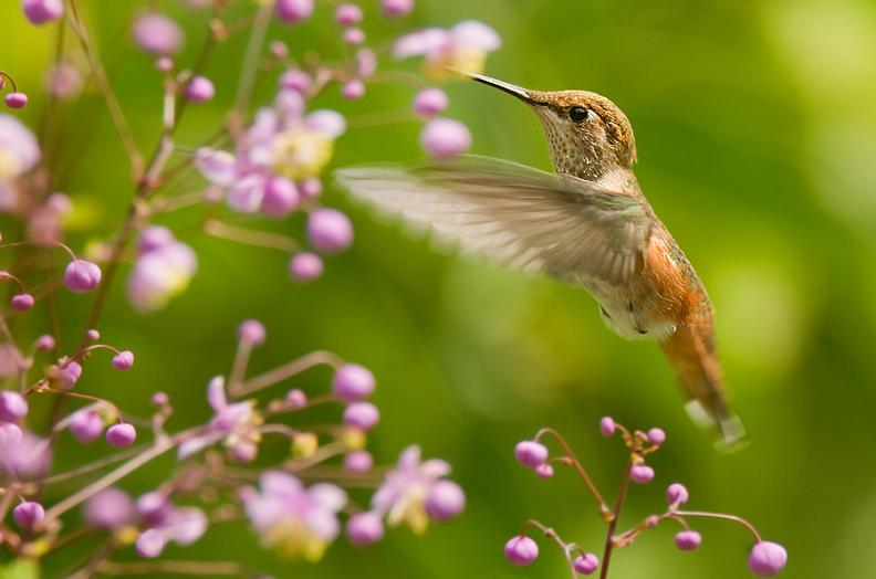 hummingbird hovering 25 Stunning Photographs of Birds in Flight