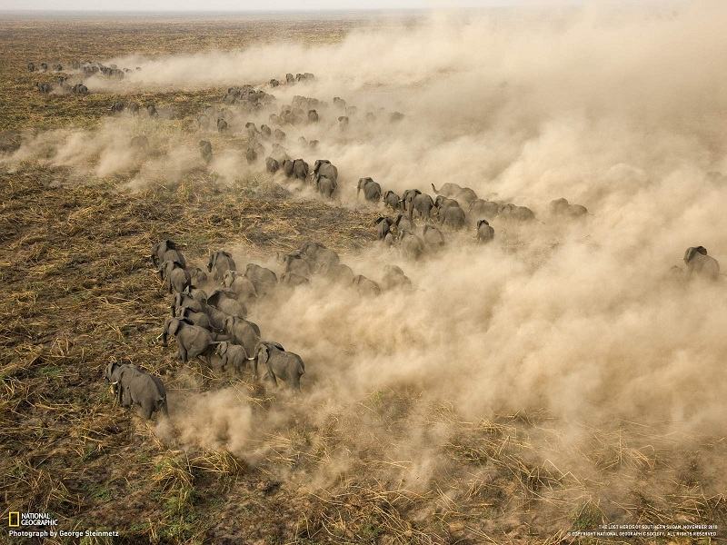 Picture of the Day: Giant Elephant Herd in Sudan | Nov 21, 2010