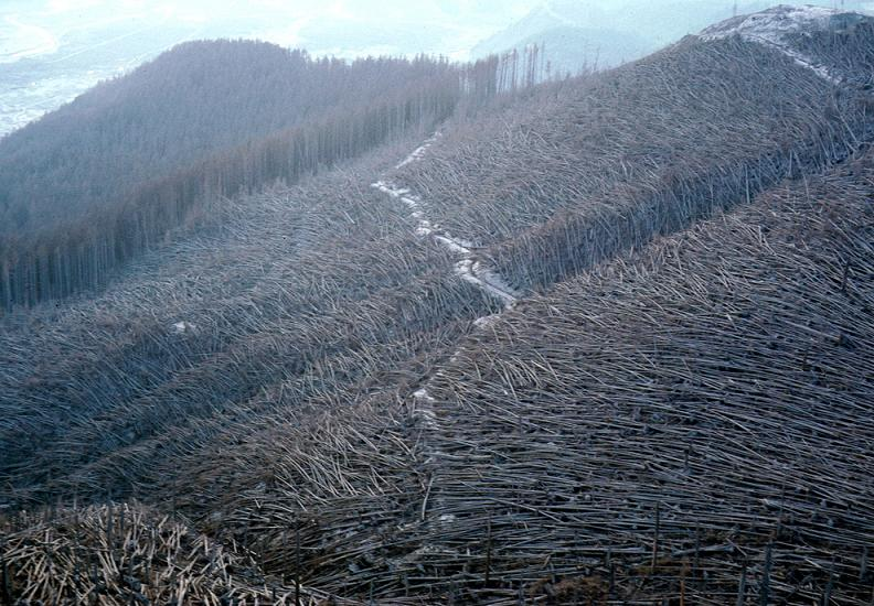 trees blown down by eruption of mount st helens Natures Fury: 30 Chilling Photos of Natural Hazards