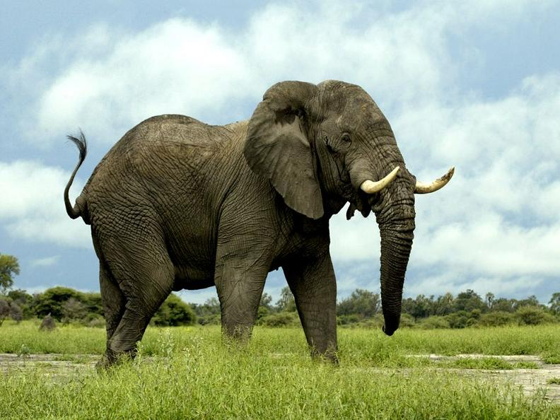 biggest land animal on earth - photo #3