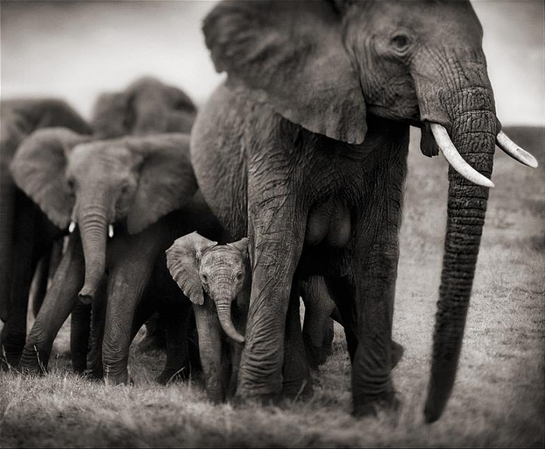 elephant mother and calf baby Top 10 Facts of the Worlds Largest Land Animal [20 pics]