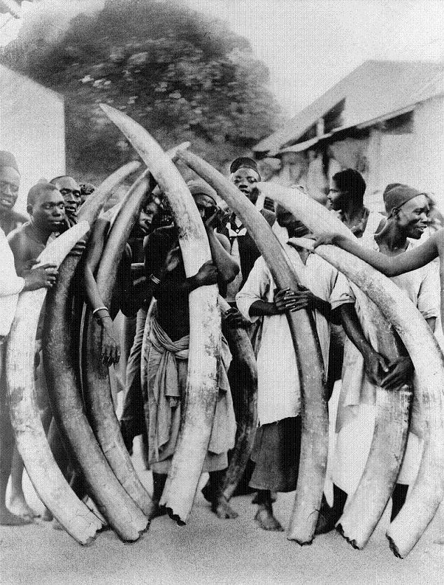 ivory trade elephant tusks Top 10 Facts of the Worlds Largest Land Animal [20 pics]
