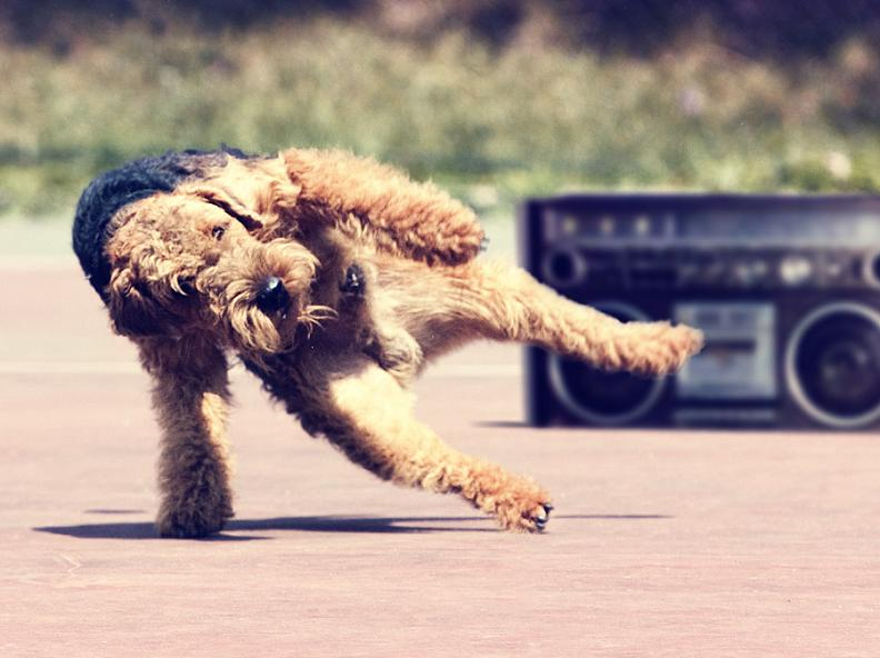 Picture of the Day: Breakdancing Dog! | Jan. 2, 2011
