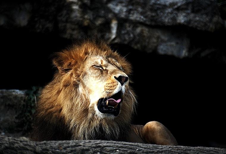 lion-yanwing