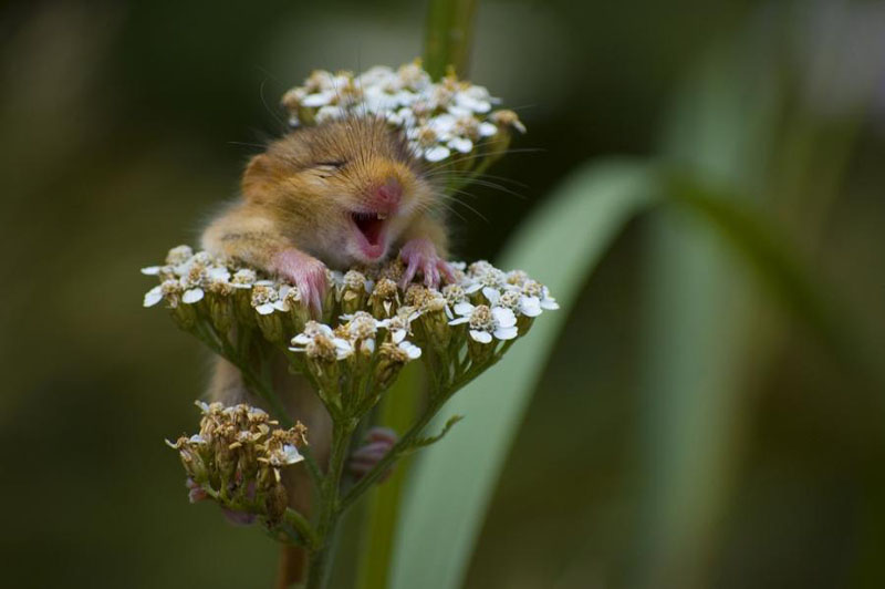 hamster loves flowers The Top 50 Pictures of the Day for 2011