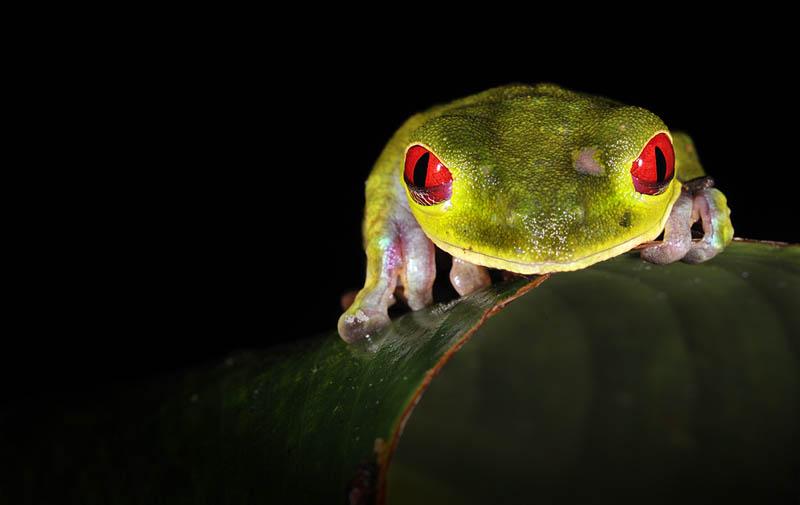 frog closeup 1 The Incredible Praying Mantis [25 pics]