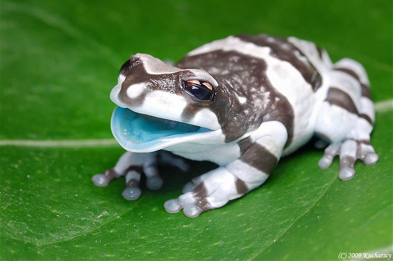 V Frog Kpm 10 Reasons Frog...