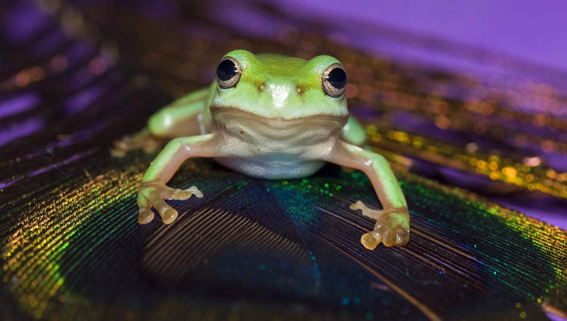 frog closeup 16 10 Reasons Frogs Are Awesome [25 Pics]