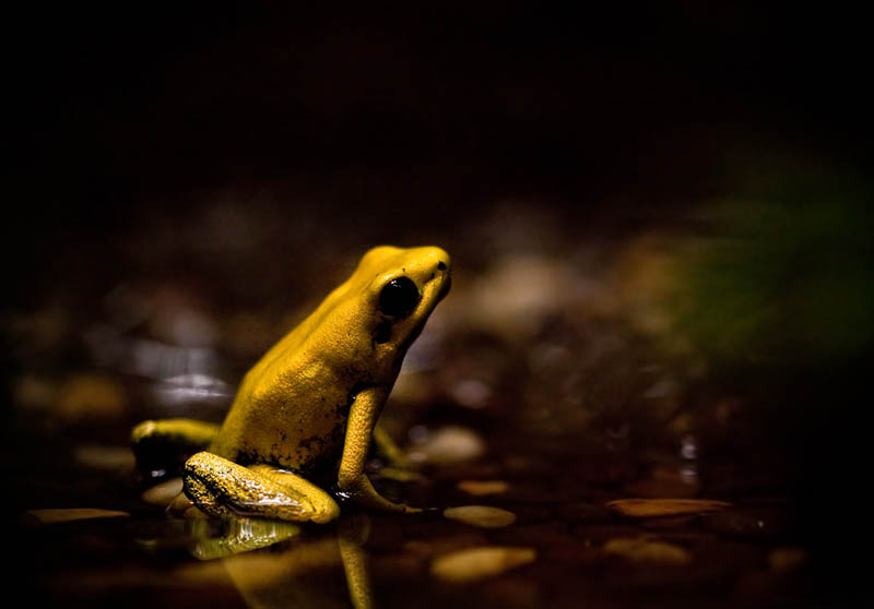 frog closeup 4 10 Reasons Frogs Are Awesome [25 Pics]