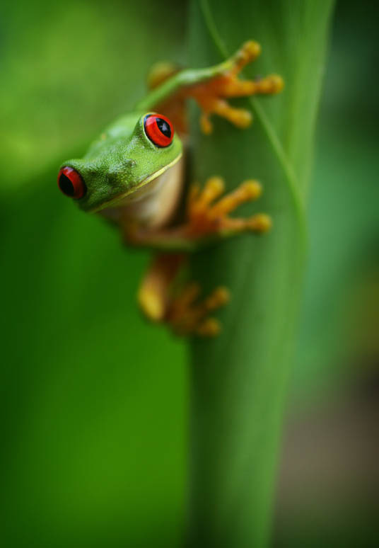 frog closeup 5 10 Reasons Frogs Are Awesome [25 Pics]