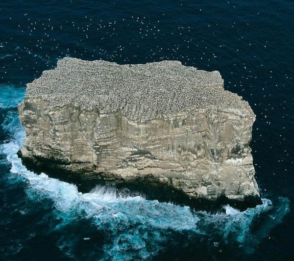 Gannet colony, Eldey island, Iceland