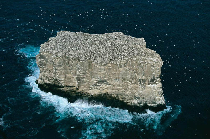 gannet colony eldey island iceland 25 Mind Blowing Aerial Photographs Around the World