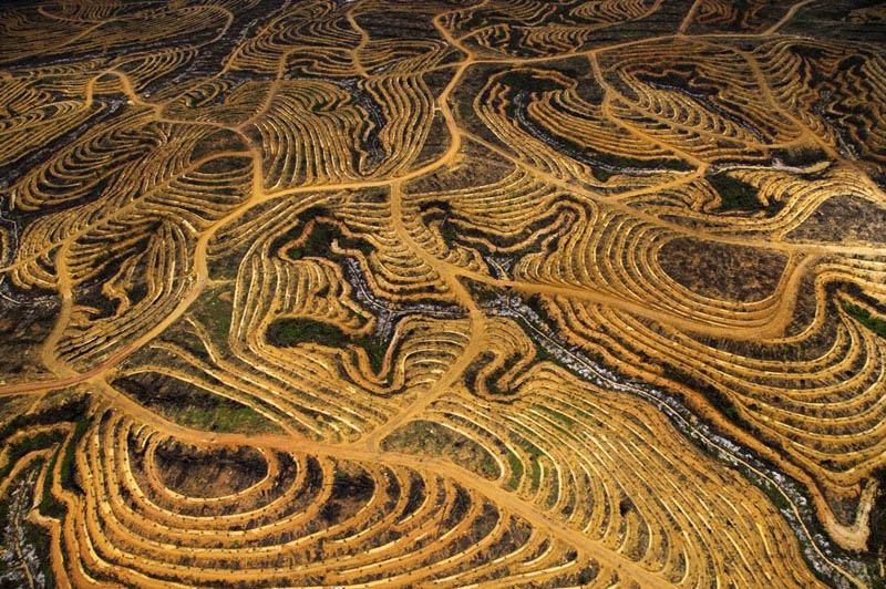 new palm oil plantation near pundu borneo indonesia 25 Mind Blowing Aerial Photographs Around the World